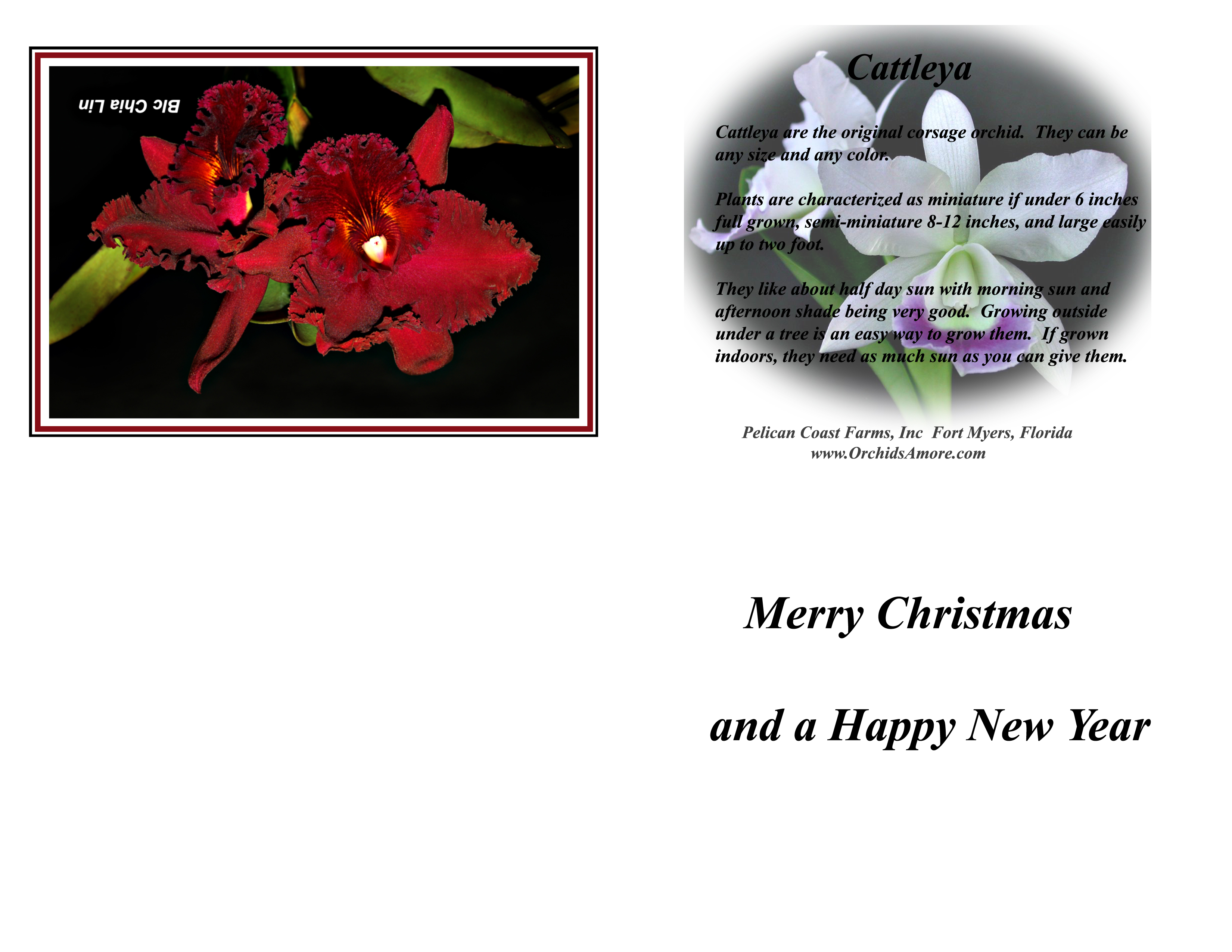 Free Orchid Christmas Birthday And Greeting Cards