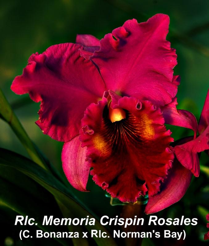 Rlc. Memoria Crispin Rosales