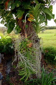 Mounting Vanda A Different Perspective